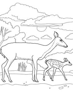 White Tail Deer Baby And Mother Coloring Page From Tailed Deers Category Select