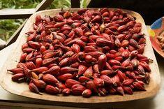 Cocoa beans in São Tomé and Príncipe ◆São Tomé and Príncipe - Wikipedia https://en.wikipedia.org/wiki/S%C3%A3o_Tom%C3%A9_and_Pr%C3%ADncipe #Sao_Tome_and_Principe