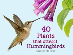 There are many flowering plants that attract hummingbirds and they don't all have to be red. See which ones are suitable for your growing zone and provide the best nectar.