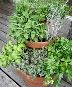 Space saving ideas for a herb garden on the balcony - Garden Projects DIY Garden Pests, Garden Planters, Herb Garden, Balcony Planters, Balcony Gardening, Container Flowers, Container Plants, Container Gardening, Planting Succulents