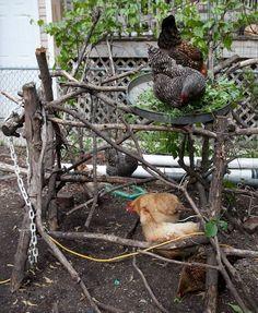 Chicken Roost, Chicken Garden, Chicken Life, Backyard Chicken Coops, Chicken Coop Plans, Building A Chicken Coop, Diy Chicken Coop, Chickens Backyard, Chicken Houses