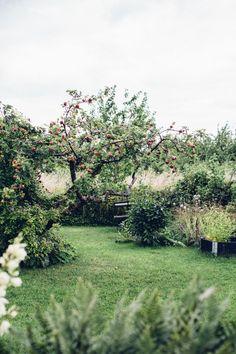 Garden design, pin design 4770741583 for the stunning yard. Farm Gardens, Outdoor Gardens, Indoor Outdoor, Unique Cottages, Green Garden, Tropical Garden, Parcs, Edible Garden, Garden Inspiration