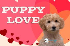 Valentine's Day Puppy Love