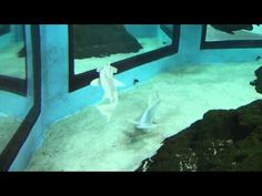 Mote Aquarium Florida  GIANT GROUPER , HAMMERHEAD SHARKS PLUS!