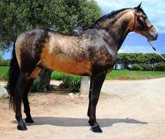 Les particularités des robes - Un cheval avec le gène sooty