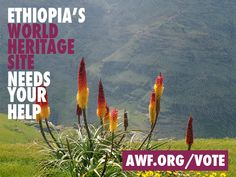 Vote for AWF to help us restore Simien Mountains National Park!