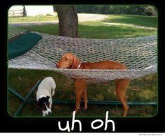 Haha my dog did this!!!!! So funny