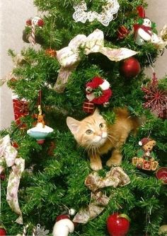 To us humans, the Christmas tree is a beautiful decoration meant to be admired and gathered around, to a cat it's a completely different story. For a kitty, your tree is basically a giant toy with more toys hanging from it.
