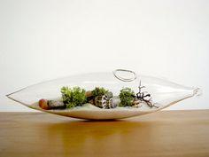 Modern Beach Vessel Lichen Moss Terrarium by TinyTerrains on Etsy Terrariums, Garden Terrarium, Succulent Terrarium, Aquascaping, Air Plants, Indoor Plants, Potted Plants, Belle Plante, Pot Plante