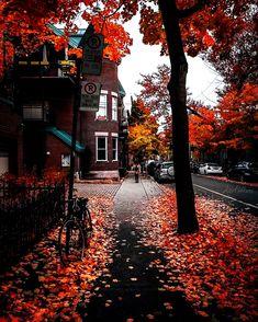 Herbst Bucket List, Autumn Cozy, Autumn Fall, Autumn Witch, Autumn Leaves, Autumn Scenes, Autumn Aesthetic, Aesthetic Collage, Fall Wallpaper