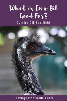 What is Emu Oil and What is It Good for?