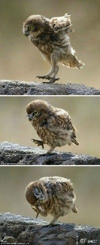 1st panel: Omigosh, what is that?          2nd panel: Oh, I guess it's okay...             3rd panel: Peckish Owl, at your service!