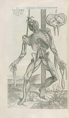 De Humani Corporis Fabrica (1543)     Andreas Vesalius