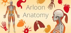 Arloon is the best ICT resource to enhace teaching and learning in the classroom, available for iOS and Android. Augmented Virtual Reality, Apps, Anatomy, Android, Classroom, Teaching, School, Movie Posters, Augmented Reality