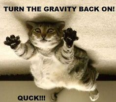 20 Funny Animal Pictures with Quotes