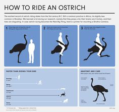 Images For > Ostrich Riding