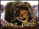 I want to meet Robyn and all the kitties of Crooked Acres, but I enamored with Miz Poo most of all!