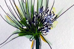 Chive flower watercolour detail. All artwork is copyright Karen Smith.