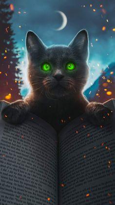 Magic Cat iPhone Wallpaper - iPhone Wallpapers