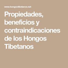 Propiedades, beneficios y contraindicaciones de los Hongos Tibetanos