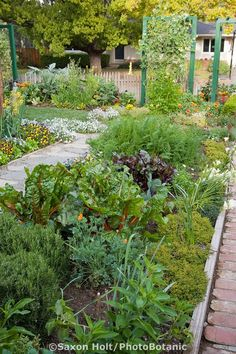 mixed bed of herbs, vegetables, and flowers between paths