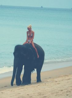 an elephant ride on the beach!  fabulous