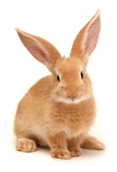 Receive a bunny with your Tieks purchase! Rabbit Pictures, Cute Animal Pictures, Animals And Pets, Funny Animals, Lapin Art, Raising Rabbits, Cute Baby Bunnies, Rabbit Art, Tier Fotos