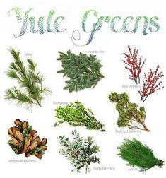 Enjoyable White Pine Winter Greenery Wellsuited Green Christmas Inspiration Yule Solstice And - Flower Images Green Christmas, Winter Christmas, Winter Holidays, Christmas Time, Christmas Crafts, Merry Christmas, Christmas Greenery, Pagan Christmas, Yule Crafts