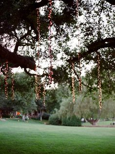 Hanging tree String Lights!! A classy approach to the FAR overplayed tree trunk wrapping