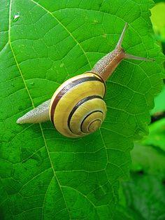 Snail spiraling....