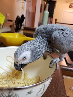 African Grey Parrot, Gray Nails, Parrots, Animals, Eat, Animales, Animaux, Parrot, Animal