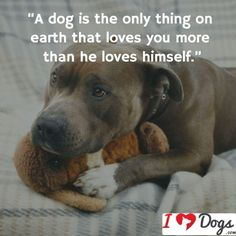 If only people were more like dogs!