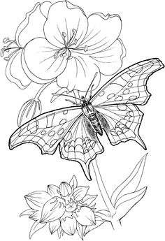 butterfly-stands-on-a-plant-coloring-page.gif 1,024×1,500 pixels