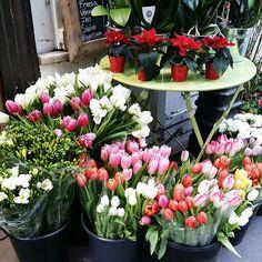 """ #paris #flowershop"" #tulips"