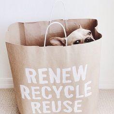 Renove, recicle, reuse.