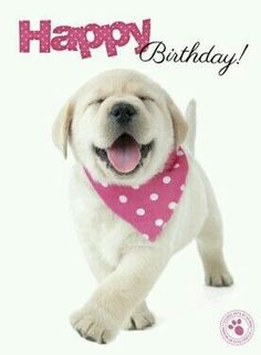 happy birthday wishes quotes for friends, brother, sister, boss, wife and happy birthday wishes quotes with images for free to share. Happy Birthday Puppy, Happy Birthday Pictures, Happy Birthday Messages, Happy Birthday Greetings, Happy Birthday Labrador, 21 Birthday, Belated Birthday, Best Birthday Quotes, Birthday Funnies
