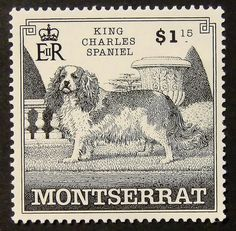 13707 Framed Postage Stamp Art Cavalier by PassionGiftStampArt, $14.90
