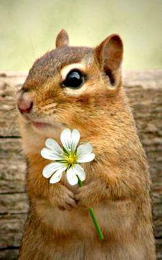 Figured if I picked you a nice flower to express my thanks, you might just put out some more peanuts!.