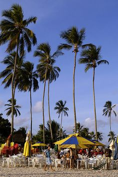 Palms Salvador Brazil