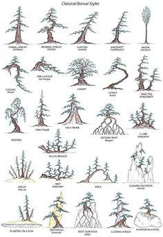 Ini adalah gaya-gaya tradisional bonsai yang kebanyakkannya masih praktikan, akan tetapi gaya-gaya bebas sudah mulai p0pular sekarang ini y...