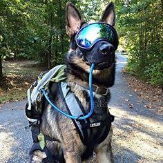 Rex Spec Dog Goggles