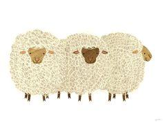 A trio of sheep