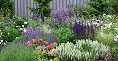 Na Instagramu se mi sešlo pár dotazů na složení mého trvalkového záhonu. Dala jsem tedy dohromady seznam základních druhů,které jsem p... Vegetable Garden Design, Small Garden Design, Container Gardening, Gardening Tips, Landscaping Plants, Dream Garden, Pathways, Houseplants, Shrubs