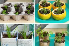 Start Your Garden The Eco-Friendly Way With These Biodegradable Seed Starters