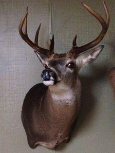 Deer mount