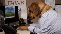 Dogs Working