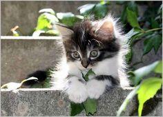 what a cute kitten