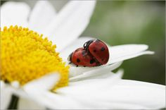 Sommer Liebe / Summer Love    Bildquelle / Photo Credits: Tanja Riedel/Posterlounge.de