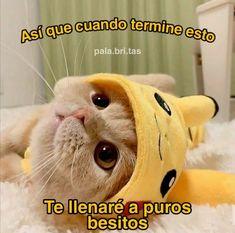 Tiempos de cuarentena :( Cute Cat Memes, Cute Love Memes, Funny Love, Spanish Love Phrases, Romantic Humor, Creative Calendar, Roblox Memes, Cartoon Profile Pics, Wholesome Memes