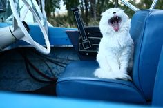 Daily Dozen for May 11, 2015 -- Photos -- National Geographic Your Shot